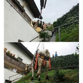 Kuh- und Pferdetransportgurt WAKA